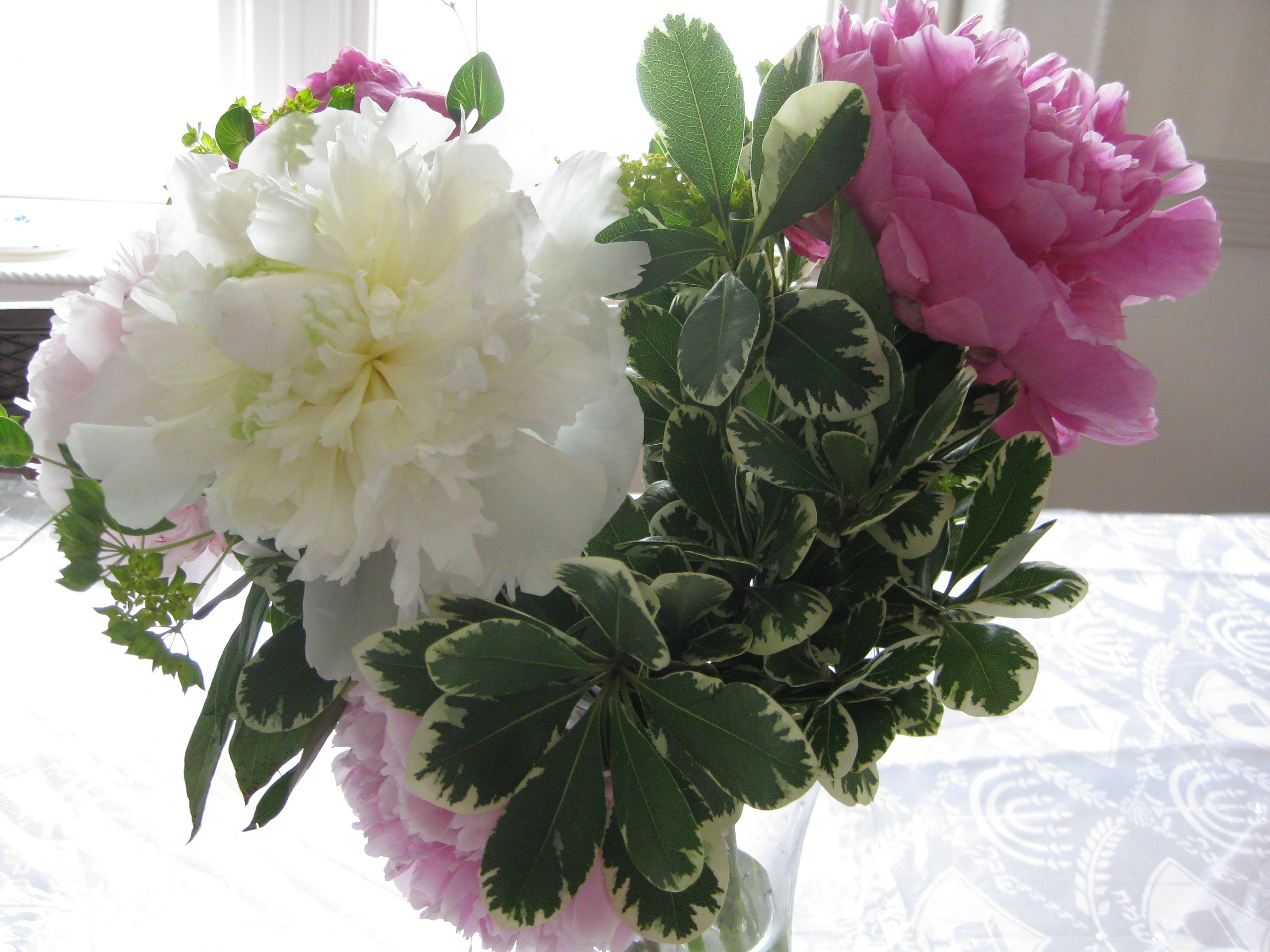 Making crepe paper peonies pragmatic attic my favorite flower the peony has such a short season mightylinksfo